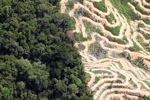 Deforestation in Borneo -- sabah_2091