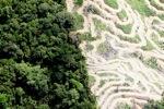 Deforestation in Borneo -- sabah_2093