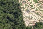 Deforestation in Borneo -- sabah_2094