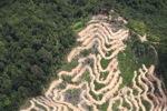 Deforestation in Borneo -- sabah_2096