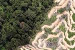 Deforestation in Borneo -- sabah_2099