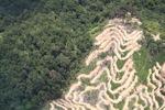 Deforestation in Borneo -- sabah_2100