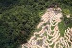 Deforestation in Borneo -- sabah_2101