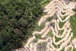 Deforestation in Borneo -- sabah_2102