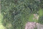 Deforestation in Borneo -- sabah_2107