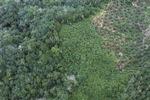 Deforestation in Borneo -- sabah_2108