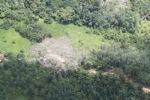 Deforestation in Borneo -- sabah_2109