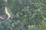 Deforestation in Borneo -- sabah_2115