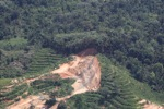 Deforestation in Borneo -- sabah_2120