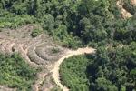 Deforestation in Borneo -- sabah_2124