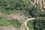 Deforestation in Borneo -- sabah_2125