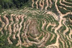 Deforestation in Borneo -- sabah_2126