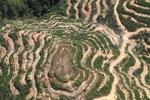 Deforestation in Borneo -- sabah_2127