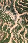 Deforestation in Borneo -- sabah_2128