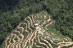 Deforestation in Borneo -- sabah_2129