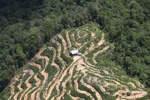 Deforestation in Borneo -- sabah_2130
