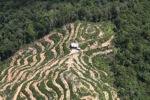 Deforestation in Borneo -- sabah_2131
