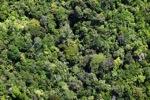 Rainforest in Borneo -- sabah_2133