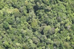 Rain forest in Borneo -- sabah_2134
