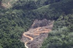 deforestation for oil palm -- sabah_2140