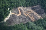 deforestation for oil palm -- sabah_2144
