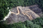 deforestation for oil palm -- sabah_2145