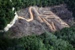 deforestation for oil palm -- sabah_2146