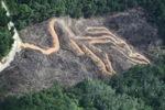 deforestation for oil palm -- sabah_2150