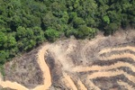 deforestation for oil palm -- sabah_2152