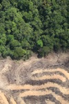 deforestation for oil palm -- sabah_2153