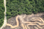 deforestation for oil palm -- sabah_2154