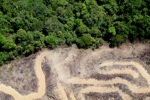 deforestation for oil palm -- sabah_2155