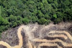 deforestation for oil palm -- sabah_2156