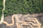 deforestation for oil palm -- sabah_2157