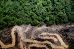 deforestation for oil palm -- sabah_2158