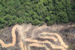 deforestation for oil palm -- sabah_2160