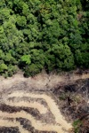 deforestation for oil palm -- sabah_2161