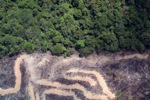 deforestation for oil palm -- sabah_2162