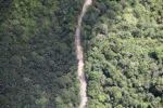 logging road -- sabah_2166