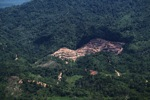 deforestation for oil palm -- sabah_2171