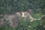 deforestation for oil palm -- sabah_2180