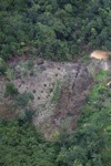 deforestation for oil palm -- sabah_2182