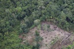 deforestation for oil palm -- sabah_2183
