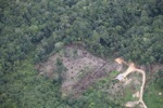 deforestation for oil palm -- sabah_2184