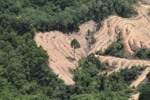 deforestation for oil palm -- sabah_2196