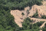 deforestation for oil palm -- sabah_2197