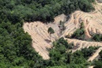 deforestation for oil palm -- sabah_2198