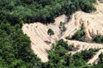 deforestation for oil palm -- sabah_2201