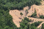 deforestation for oil palm -- sabah_2202