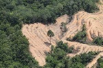 deforestation for oil palm -- sabah_2203